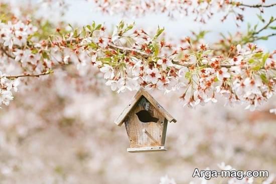 عکس متفاوت و زیبا فصل بهار