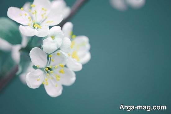 انواع دیدنی تصویر فصل بهار