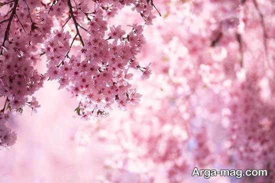 تصاویر جذاب و زیبا فصل بهار
