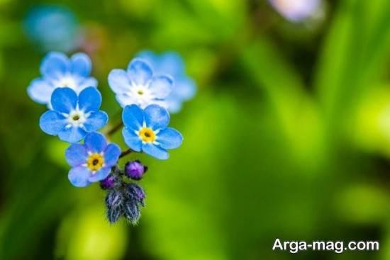 انواع خاص عکس فصل بهار