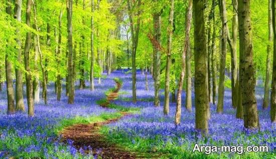 انواع تصاویر دیدنی فصل بهار