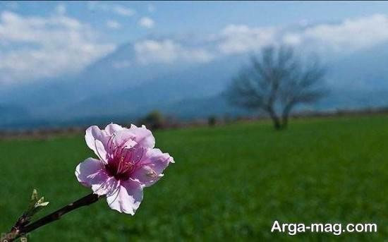 عکس های سرسبز فصل بهار