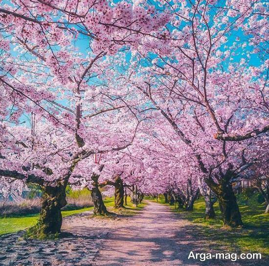 انواع تصاویر خاص و باحال فصل بهار