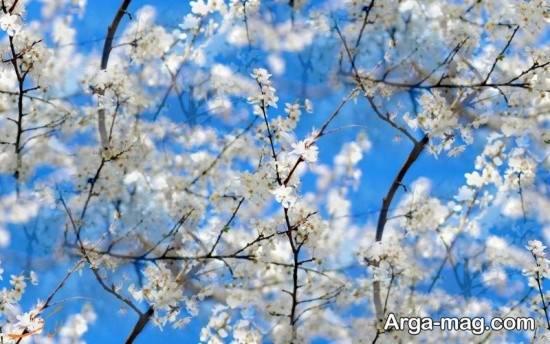 سری اول تصاویر فصل بهار