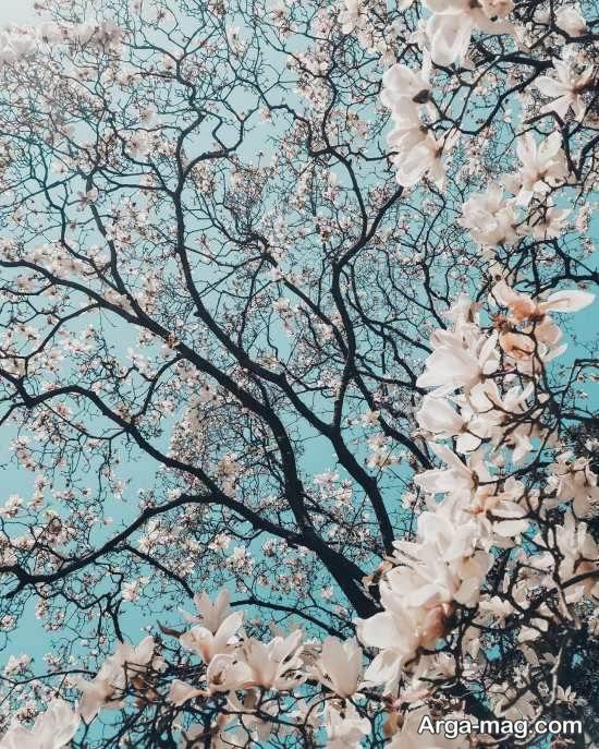 مجموعه عکس فصل بهار