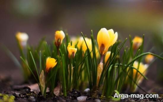 مجموعه جدید عکس فصل بهار