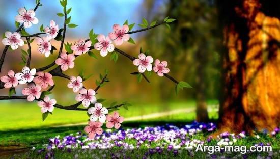 مجموعه تصویر پروفایل فصل بهار