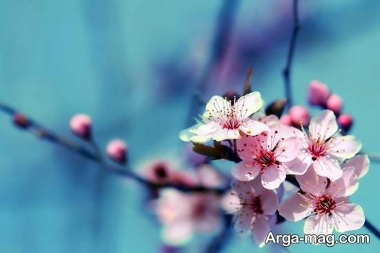 عکس پروفایل جذاب فصل بهار