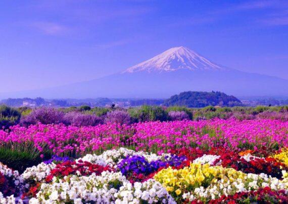 آشنایی با انواع عکس فصل بهار
