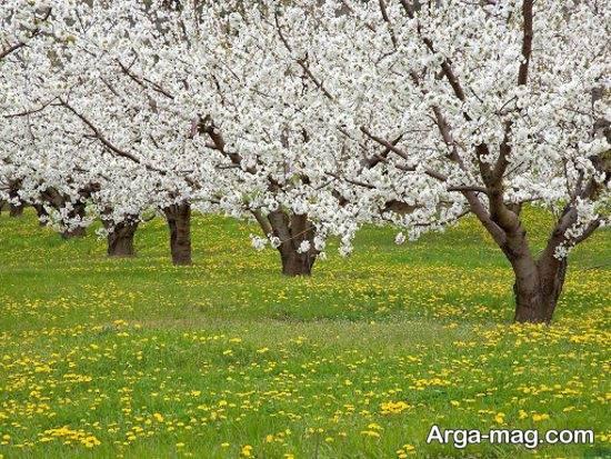 گلچین فصل بهار زیبا و جدید