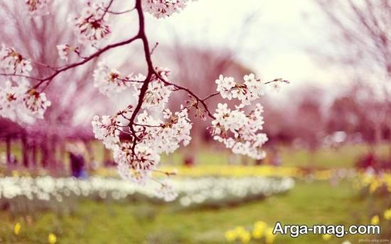 گلچین عکس های فصل بهار