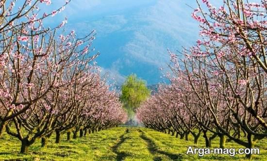 گلچین تصاویر جدید فصل بهار