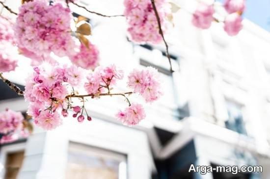 عکس فصل بهار بسیار جالب