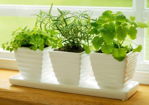 آشنایی با گیاهان مناسب آشپزخانه