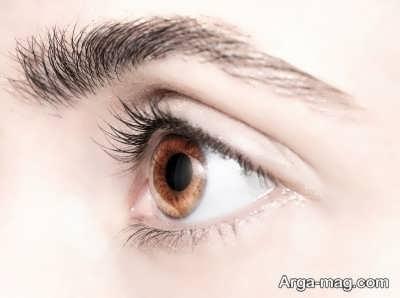 خصوصیات آناتومی چشم