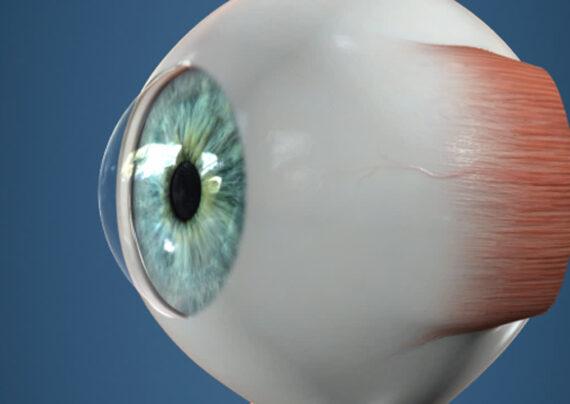 آشنایی با آناتومی چشم انسان