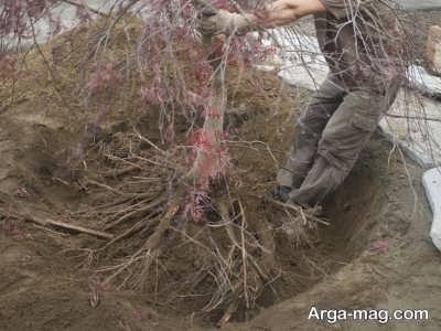 وسایل لازم برای پیوند زنی درختان