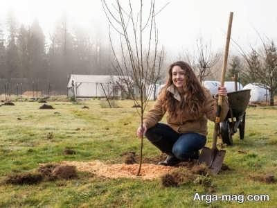 علل پیوند زدن درختان
