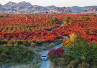 معرفی دیدنی های زیبای شهرستان قائن