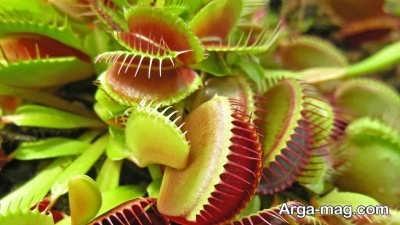 انواع گیاهان گوشتخوار