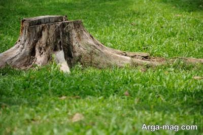 آشنایی با مشکلات کنده درختان