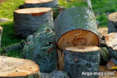 نکات مهم در مورد قطع درختان