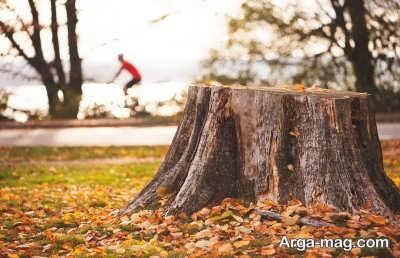 چگونگی از بین بردن کنده درخت