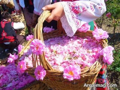 آشنایی با عطر گلاب اصل