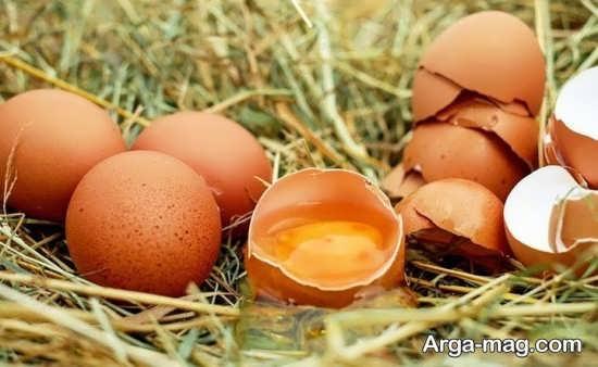 مضرات خوردن تخم مرغ در بارداری