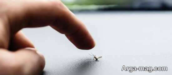 نابودی پشه در محیط خانه به روش های مختلف