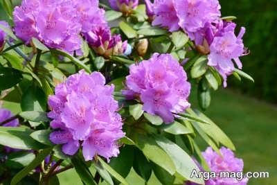 گل های مناسب تابستان