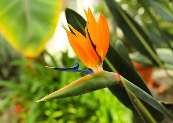 آشنایی با گل های مناسب مناطق گرمسیری