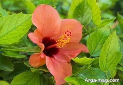 انواع گیاهان گرمسیری