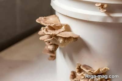 اصول مراقبت از بستر کاشت قارچ