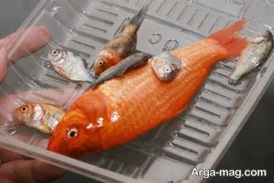 مزیت های استفاده از کود ماهی