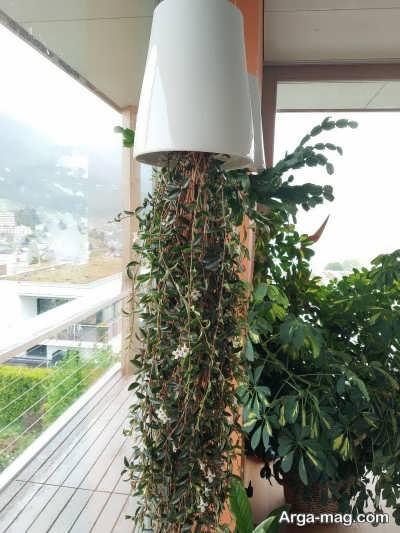 مزیت های پرورش گیاهان به صورت وارونه
