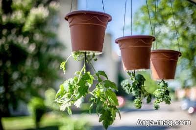 چگونگی کاشت وارونه گیاهان