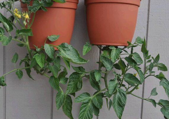 آشنایی با نحوه کاشت وارونه گیاهان