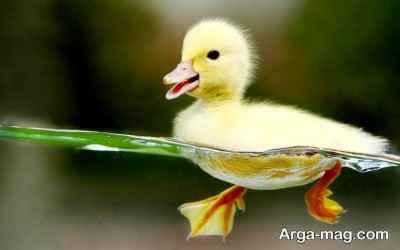نشانه اختلال اردک