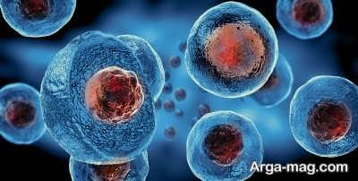 شناخت سلول های بنیادی و کاربردهای آن ها