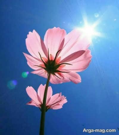 جمله های زیبا در مورد طلوع خورشید