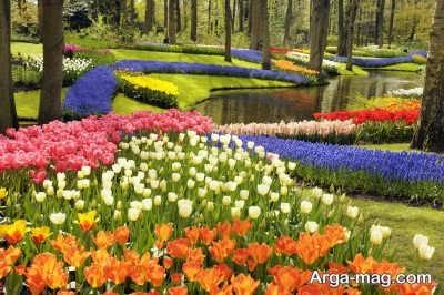 شناسایی زیباترین گل های بهاری