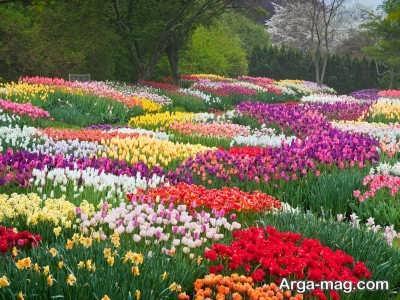 انواع گیاهان مناسب بهار
