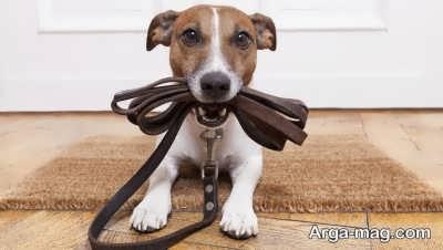چگونگی شستشوی سگ در خانه