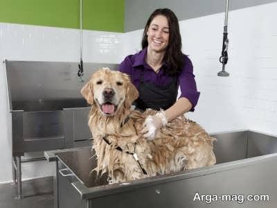 روش های شستشوی سگ ها