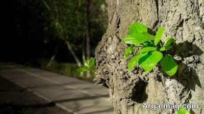 جملاتی در مورد درخت