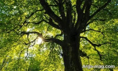متن دلنشین در مورد درخت