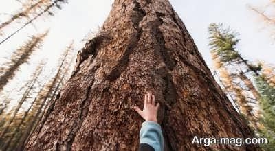 متن زیبا درباره درخت با جملاتی دلنشین