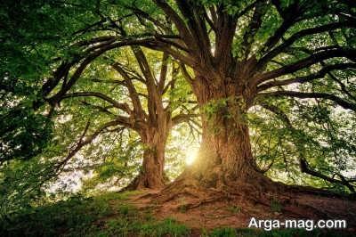 متن زیبا و دلنشین درباره درخت