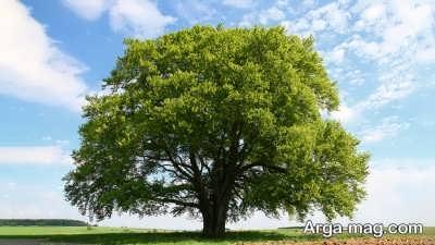 جملاتی در وصف درخت